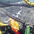 Fenómeno El Niño: Imarpe advirtió que anchoveta está migrando al sur