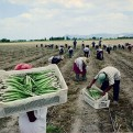 Fondo de EEUU lleva a Perú a arbitraje para el pago de bonos agrarios