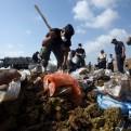 Panamá: autoridades incineran más de 8 toneladas de droga