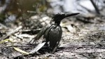 OEFA reporta un nuevo derrame de petróleo en Loreto - Noticias de derrame de petróleo