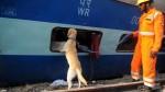 India: al menos 120 muertos por accidente ferroviario - Noticias de accidente de tren