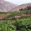 Ministerio de Agricultura declaró en emergencia hídrica 37 valles del país