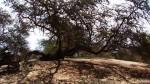 Piura: usarán aguas residuales tratadas para recuperar el bosque seco - Noticias de fauna silvestre