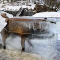 Zorro quedó congelado tras caer a río en Alemania