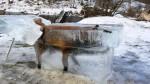 Zorro quedó congelado tras caer a río en Alemania - Noticias de alerta noticias