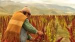 Puno: lluvias de moderada intensidad afectarían el altiplano hasta este sábado - Noticias de lampa