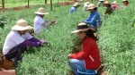Las mujeres de América Latina son cada vez más pobres, advierte la FAO - Noticias de día de la mujer