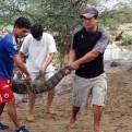 Lambayeque: cocodrilos y caimanes escaparon de zoológico durante inundaciones