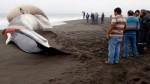 Ballena varada con gran protuberancia sorprende en costas de Chile - Noticias de chile