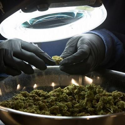 Argentina: se aprobó el uso medicinal de la marihuana