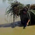 Piura: sector de Molina Azul luce inundado tras nuevo desborde del río