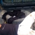 Andahuaylas: capturan a dos sujetos con 12 kilos de pasta básica de cocaína
