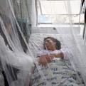 Piura: aumenta a 19 el número de víctimas mortales por dengue