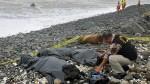 Playa Marbella: sanción por muertes se conocerá la próxima semana - Noticias de marbella