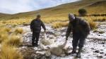 Huancavelica: heladas afectaron a más de 36 mil personas en zonas altoandinas - Noticias de yauli