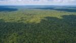 Ucayali: asesinato de indígenas que denunciaron tala a poco de prescribir - Noticias de banco mundial